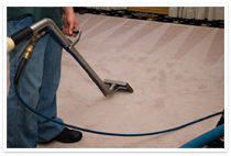 carpet steam cleaning in Seattle